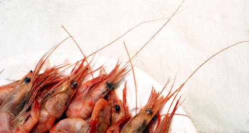 Maine Shrimp Boil